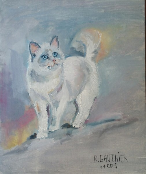 chat ragdoll GAUTHIER